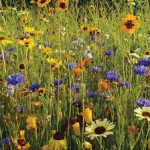 Wildflowers to bring the wild into London